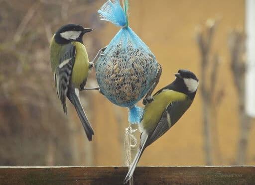 Kule dla ptaków
