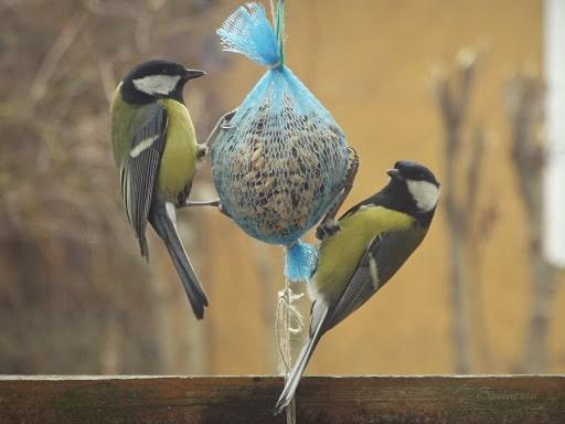 kula dla ptaków