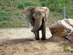 Wybierz najlepsze zdjęcie podopiecznych poznańskiego Zoo